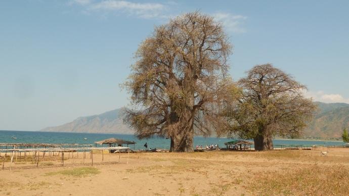 My favourite baobabs, Usisya