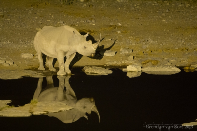 Admittedly a stolen photo - but taken at the same waterhole!
